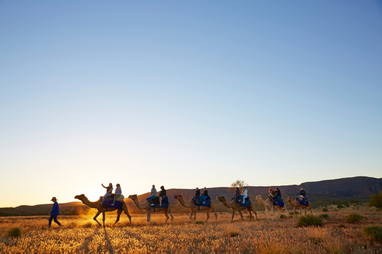 Camel tours at Pyndan